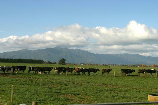 ニュージーランド酪農風景
